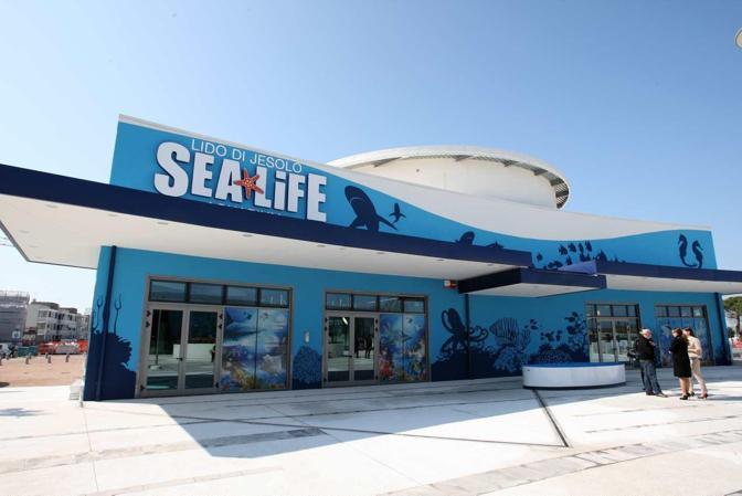 Lido di Jesolo - Sea Life